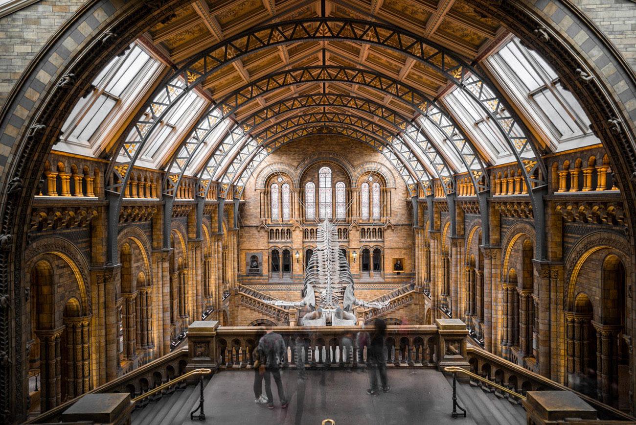 Musée d'Histoire Naturelle, Londres