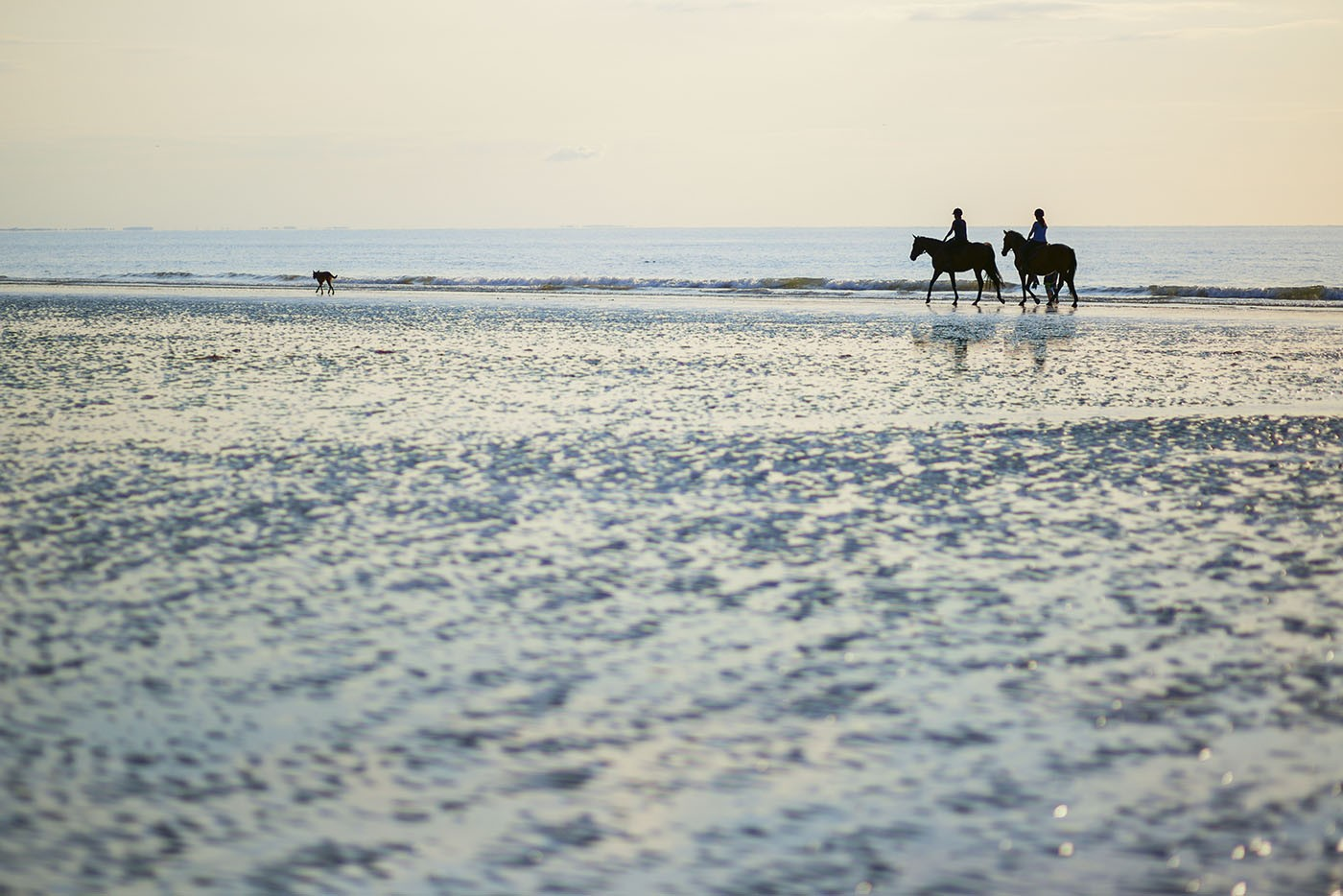 Cheval plage Deauville